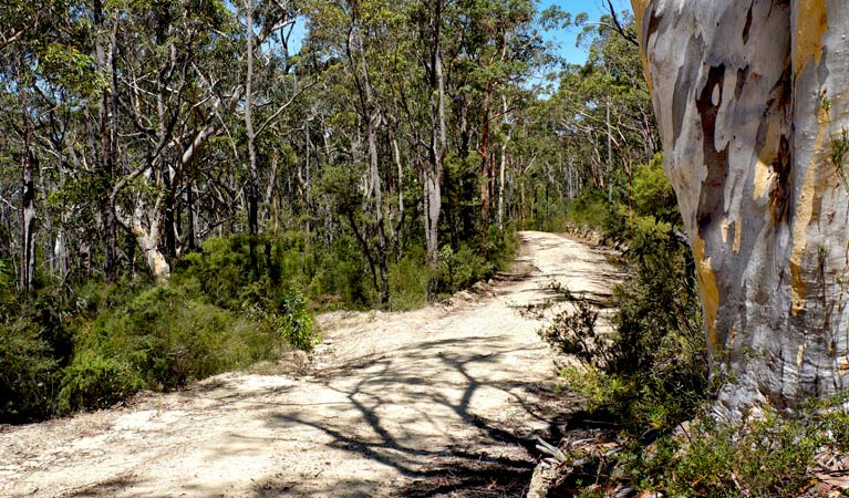 blue mountain bike trail